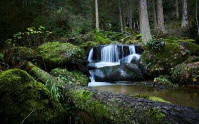 Die Kraft von Wald und Wasser